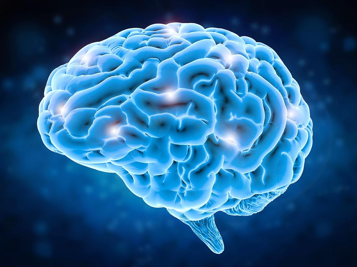 εγκέφοαλος
